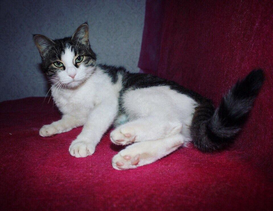 Ласковая кошка.jpg
