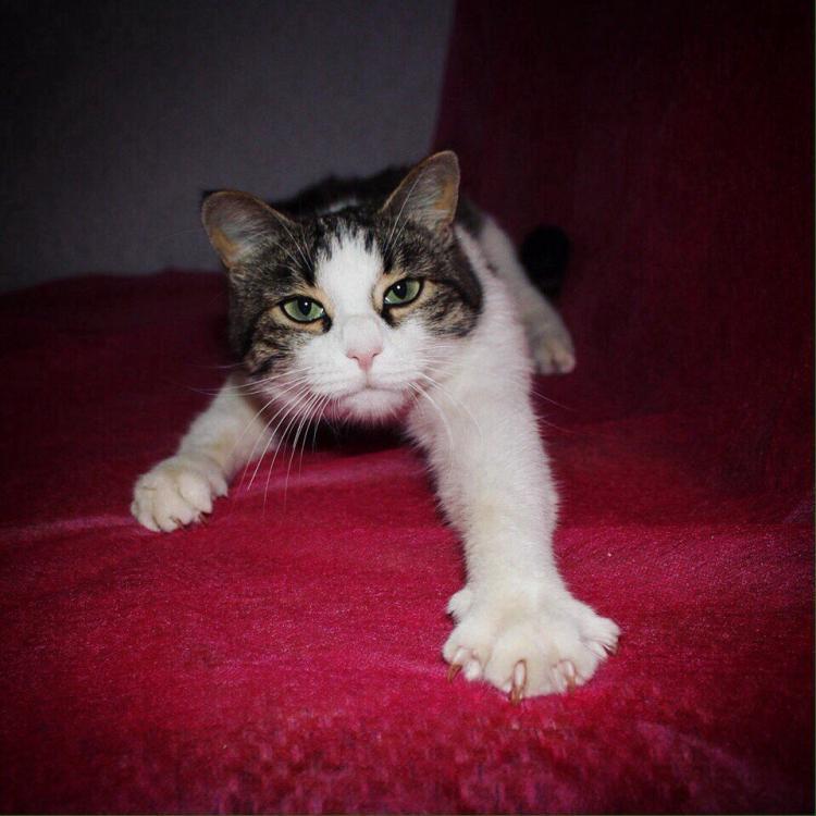 Ласковая кошка2.jpg