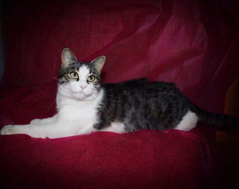 Ласковая кошка3.jpg