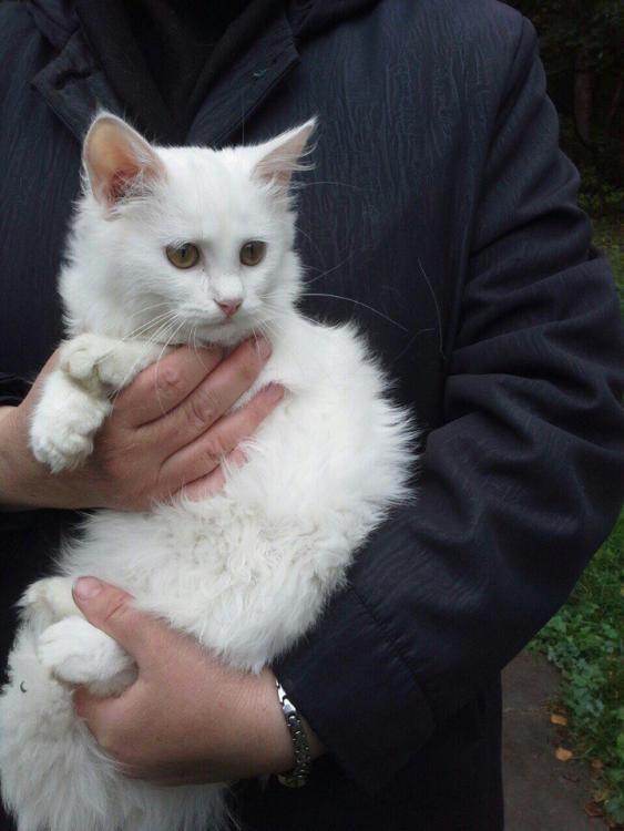 кошки из монастыря2.jpg