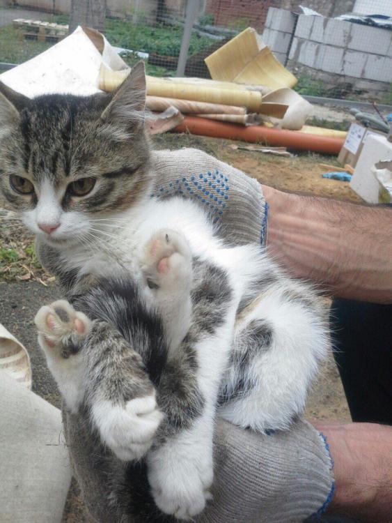 кошки из монастыря3.jpg