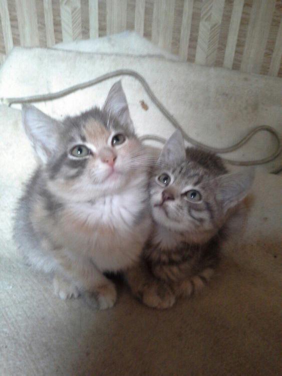 кошки из монастыря6.jpg