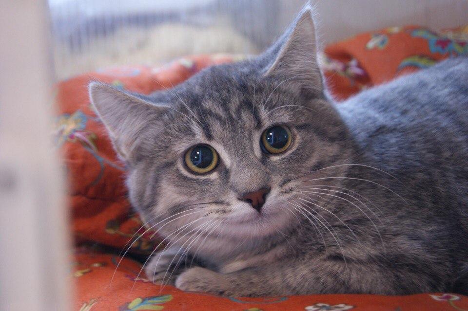 Котята2.jpg