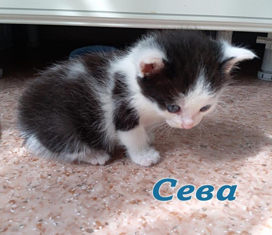4 котенка 2.jpg