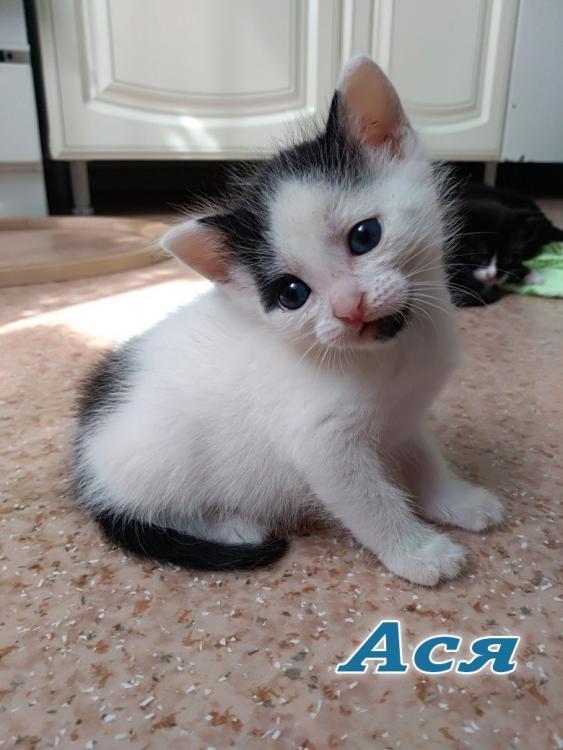4 котенка 3.jpg